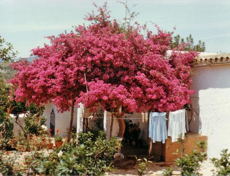Ibiza-11.jpg