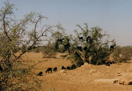 Marokko-02.jpg