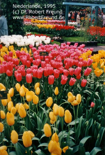 Niederlande-1995.jpg